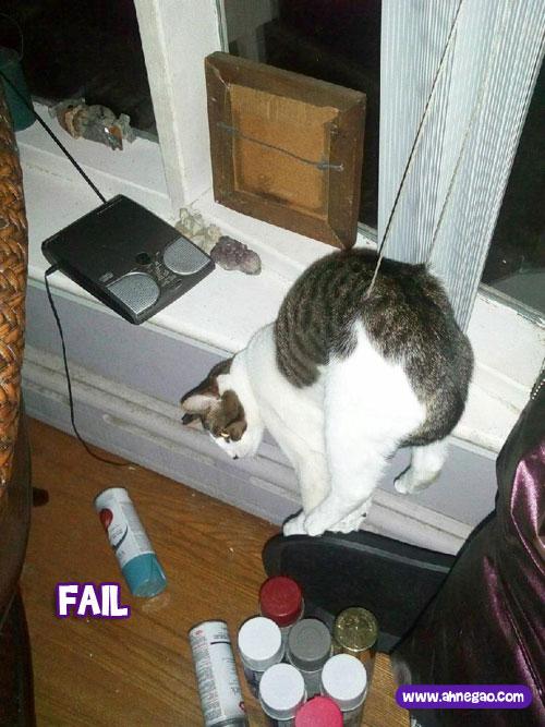 gato-espatifado